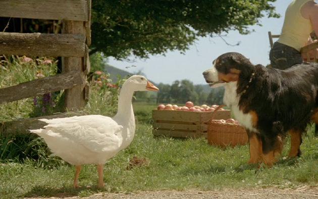 Barry & Hans Fun on the Farm